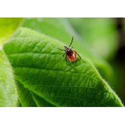 Защита от насекомых (3)